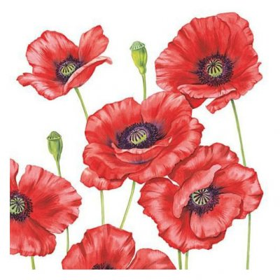 Servetti 33x33cm: Poppies, 5 kpl